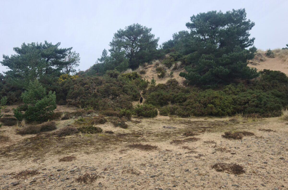 Findhorn Sand Walk large photo 4