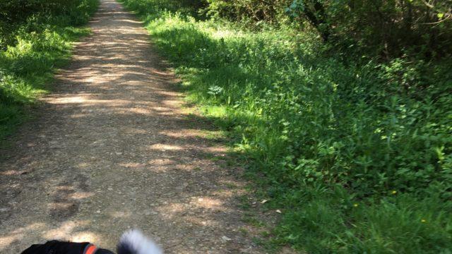 Dog walk at Firestone Copse