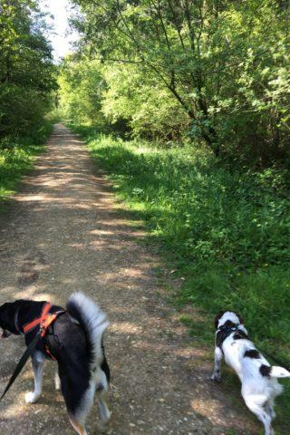 Dog walk at Firestone Copse photo
