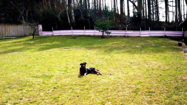 Dog walk at Firhill Paddock
