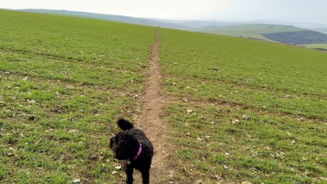 Dog walk at Firle Beacon Circuit, South Downs