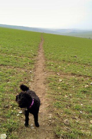 Dog walk at Firle Beacon Circuit, South Downs photo