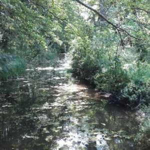 Fishlake Meadows, Romsey Hampshire