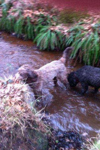 Dog walk at Fleet Pond photo