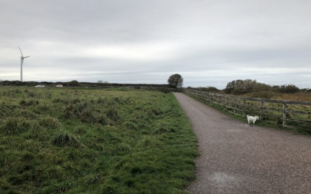 Fleetwood Nature Reserve Walk Dog walk in Lancashire