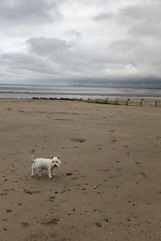 Dog walk at Fleetwood Walk photo