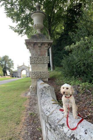 Dog walk at Fonthill Lakeside Walk photo