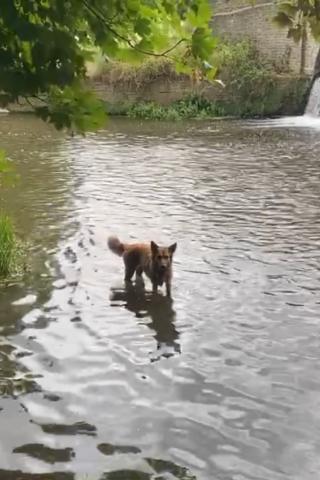 Dog walk at Foots Cray Meadows photo