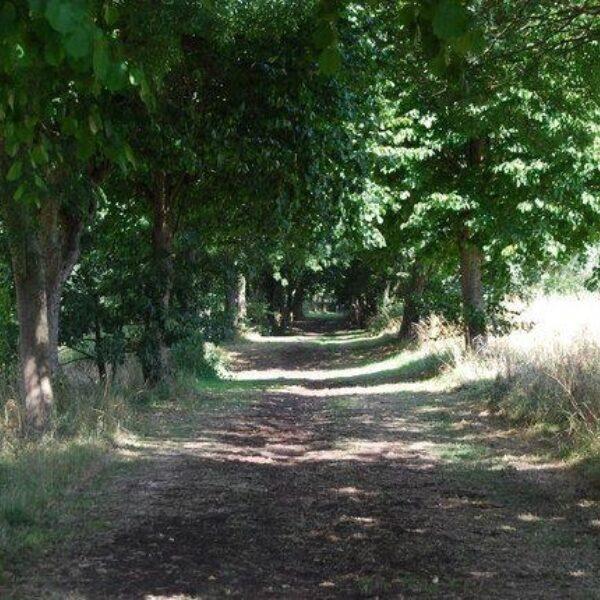 Dog walk at Foots Cray Meadows