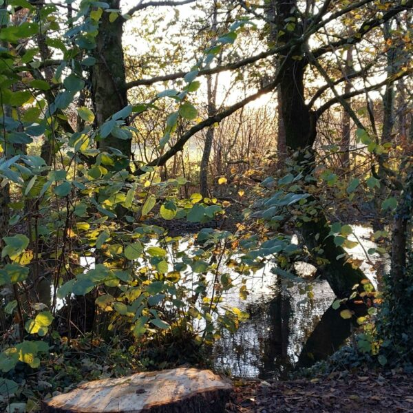 Forest Farm Country Park photo 1