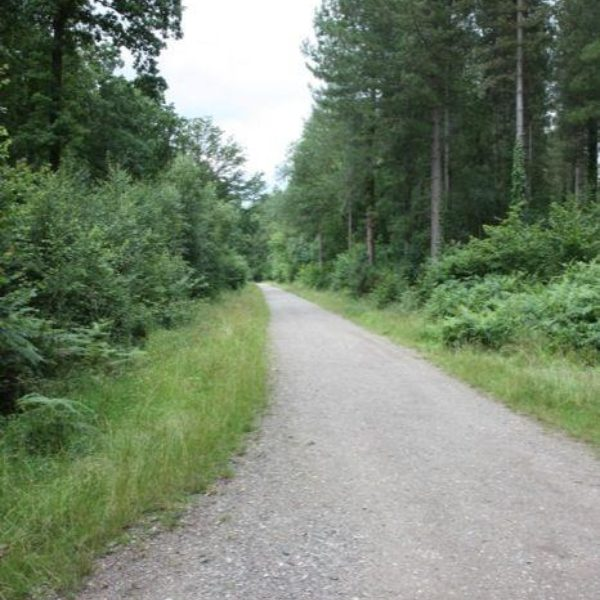 Forest Of Bere photo 9
