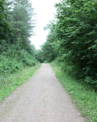 Dog walk at Forest Of Bere