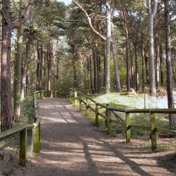 Dog walk at Formby Squirrel Reserve (leading To The Beach)