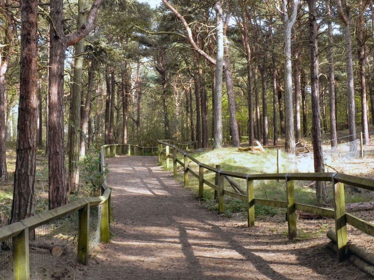Formby Squirrel Reserve (leading To The Beach) large photo 4