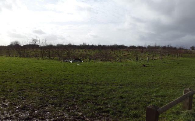 Foxburrow Wood Dog walk in Oxfordshire