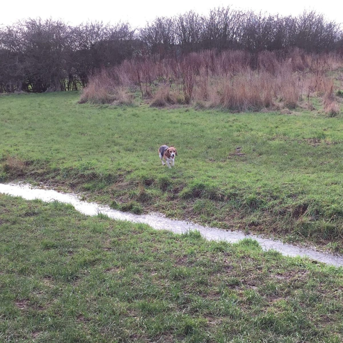 Foxburrow Wood large photo 6