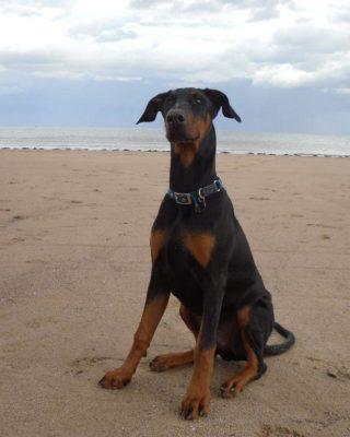 Dog walk at Fraisthorpe Beach, Bridlington