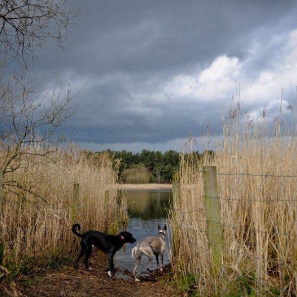 Frensham Little Ponds photo 3
