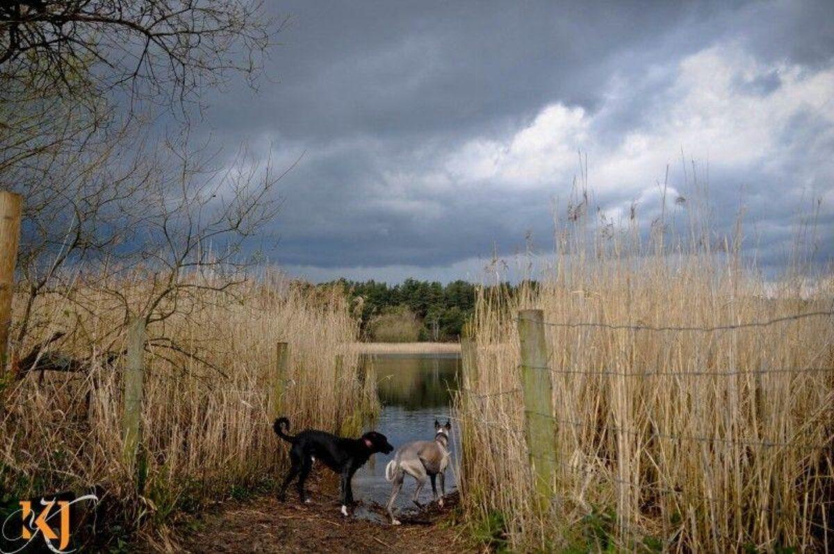 Frensham Little Ponds large photo 3