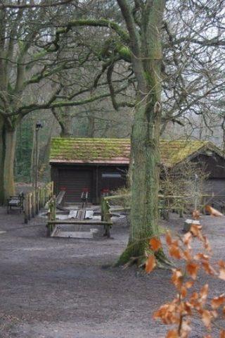 Dog walk at Frimley Lodge Park photo