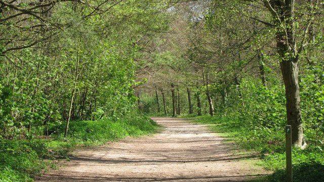 Dog walk at Friston Forest