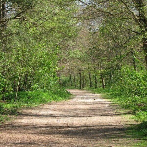 Friston Forest photo 1