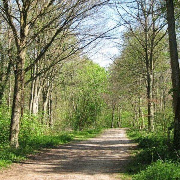 Friston Forest photo 2