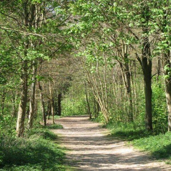 Friston Forest photo 3