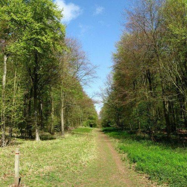 Friston Forest photo 4