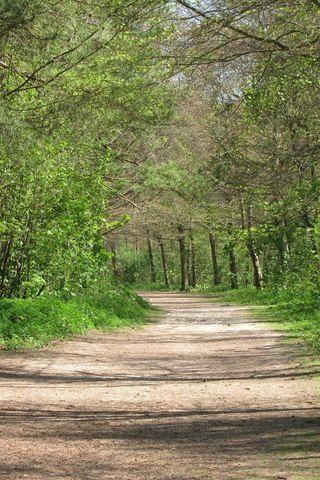 Dog walk at Friston Forest photo