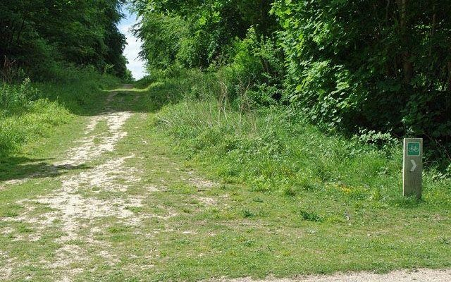Friston Forest Dog walk in Sussex (East)
