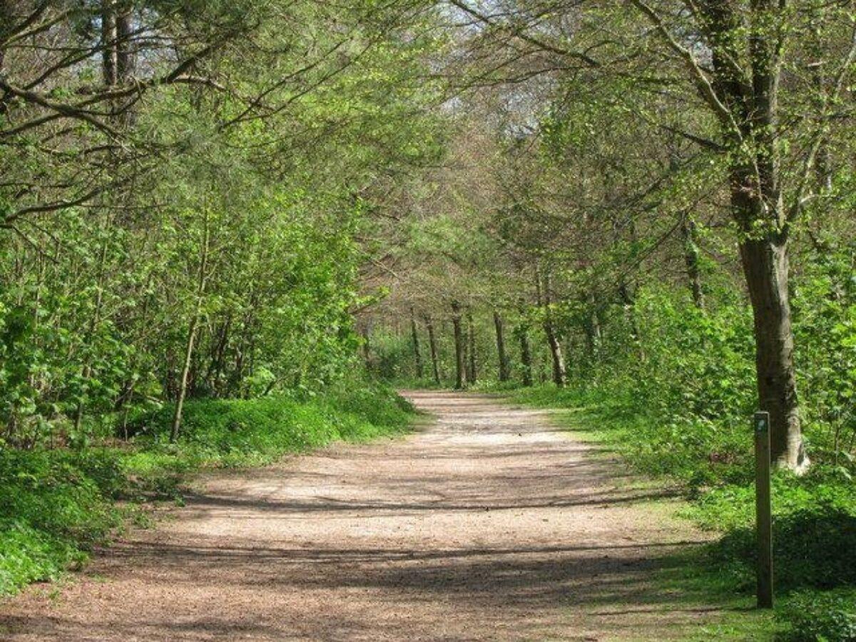 Friston Forest large photo 1