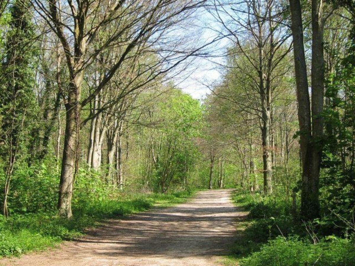 Friston Forest large photo 2