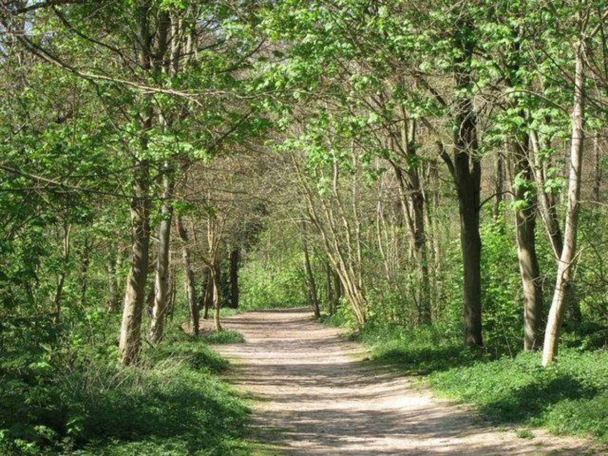Friston Forest large photo 3