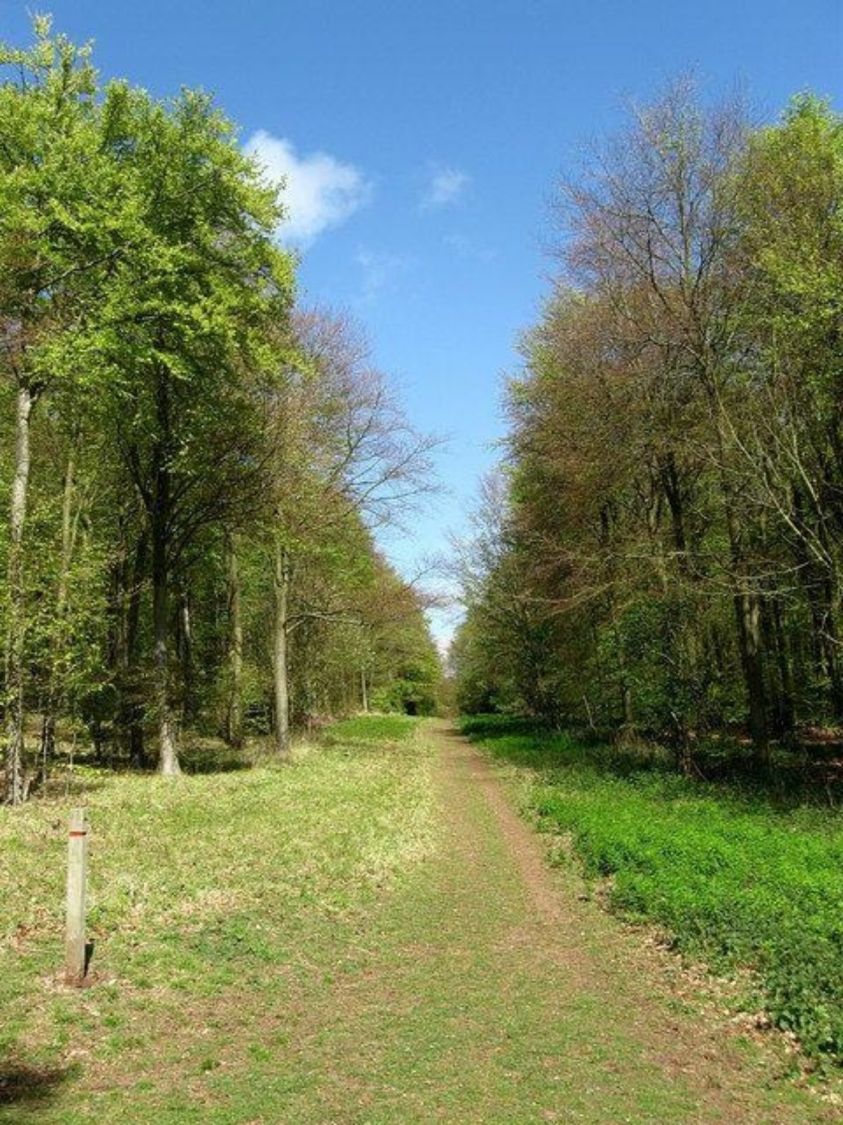 Friston Forest large photo 4