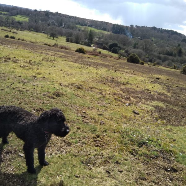 Dog walk at Frogham Pub Walk, New Forest