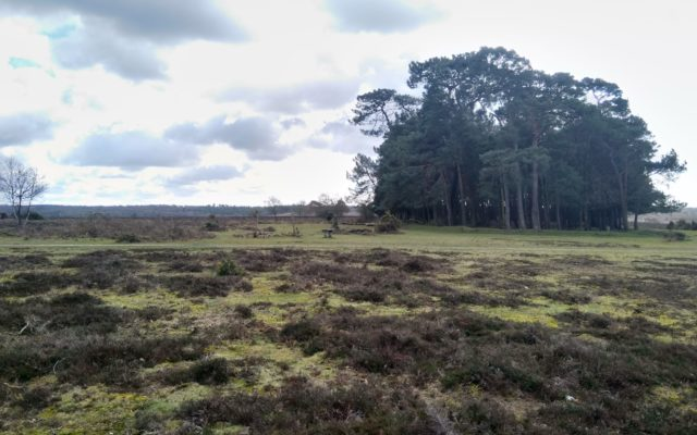 Frogham Pub Walk, New Forest Dog walk in Hampshire