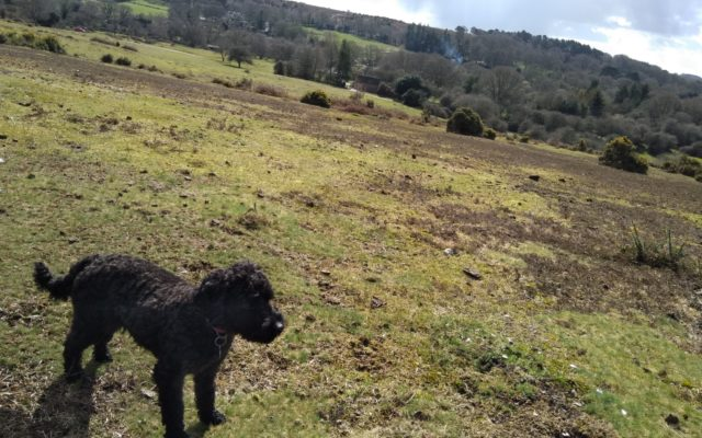 Frogham Pub Walk, New Forest Dog walk in Hampshire