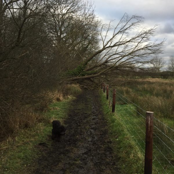 Fulbourn Country Walk photo 2