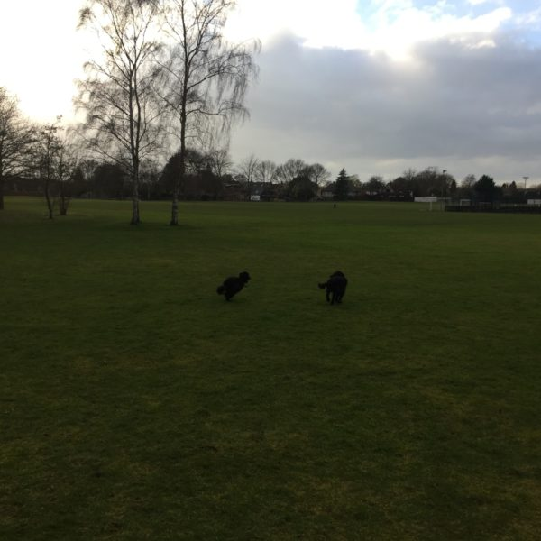 Fulbourn Country Walk photo 5