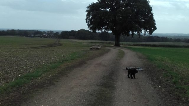 Dog walk at Gamble Down Farm Loop, Sherfield English