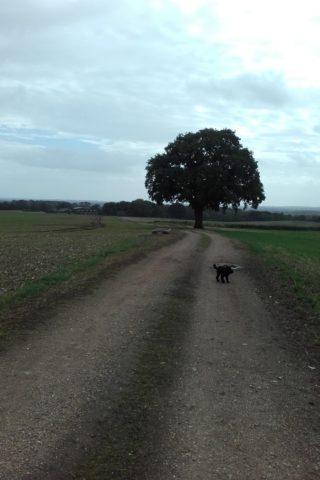 Dog walk at Gamble Down Farm Loop, Sherfield English photo