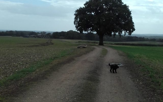 Gamble Down Farm Loop, Sherfield English Dog walk in Hampshire