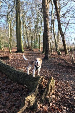 Dog walk at Garnetts Wood photo