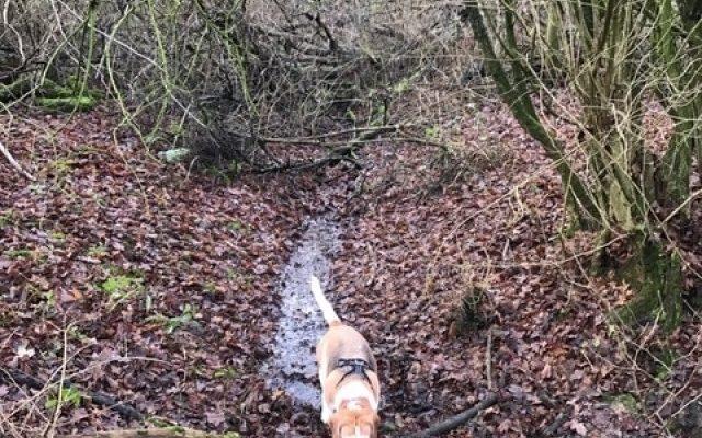 Garnetts Wood Dog walk in Essex