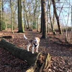 Garnetts Wood