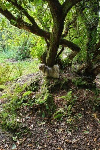 Dog walk at Gelli Aur photo