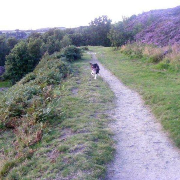 Dog walk at Gilstead Moor, Bingley
