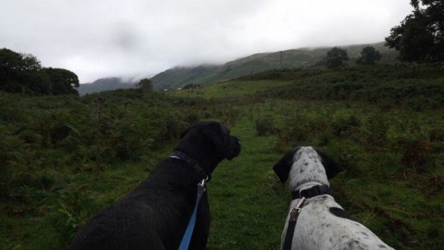 Dog walk at Glen Ogle Trail