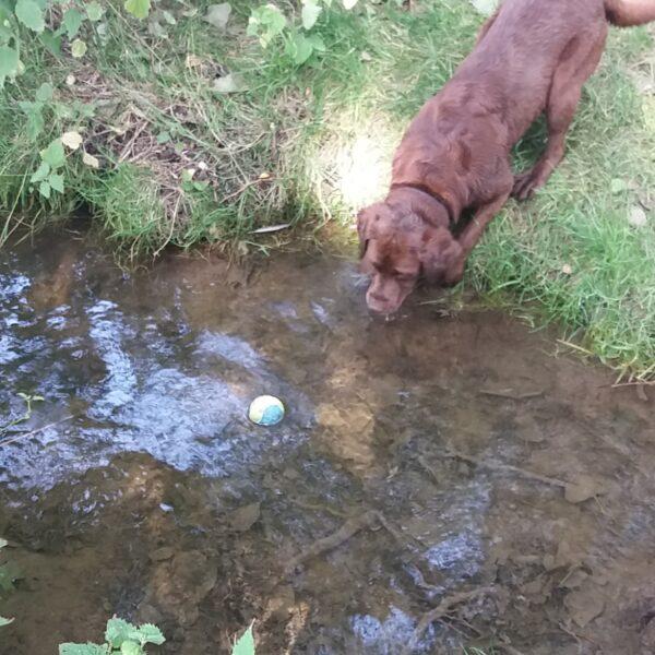 Dog walk at Godmanchester Nature Reserve